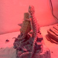 Elemental Dragon Lord