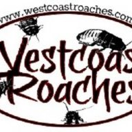 WestCoastRoaches